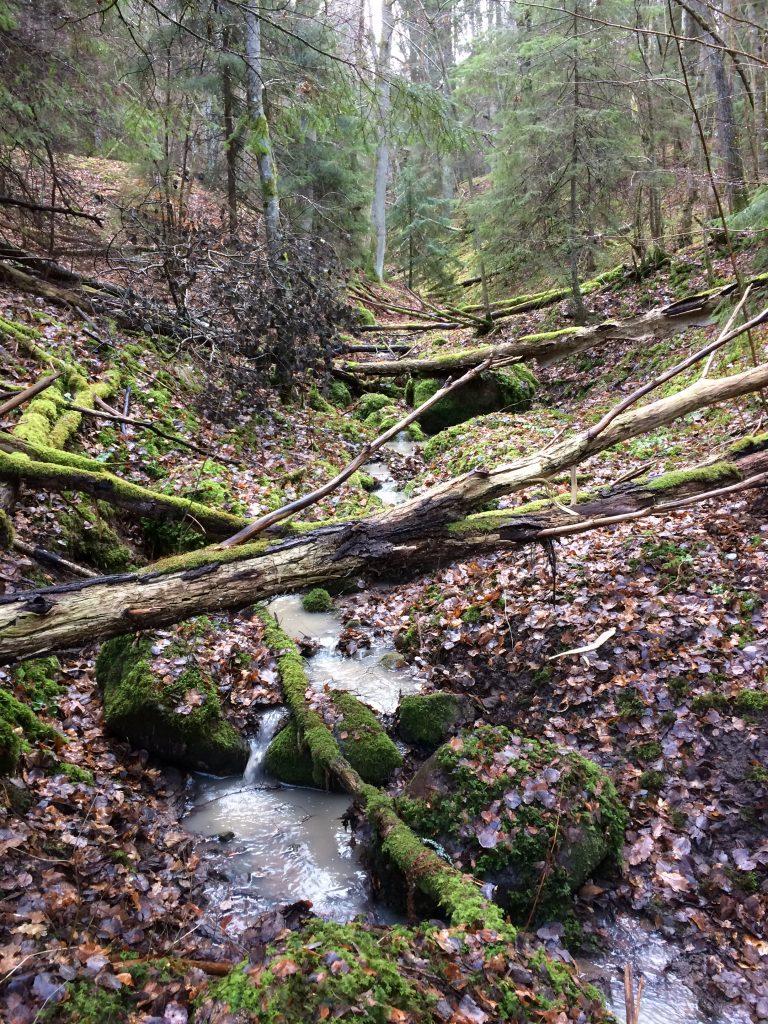 Den 5,6 km långa gula vandringsleden bjöd på många fina scenerier.