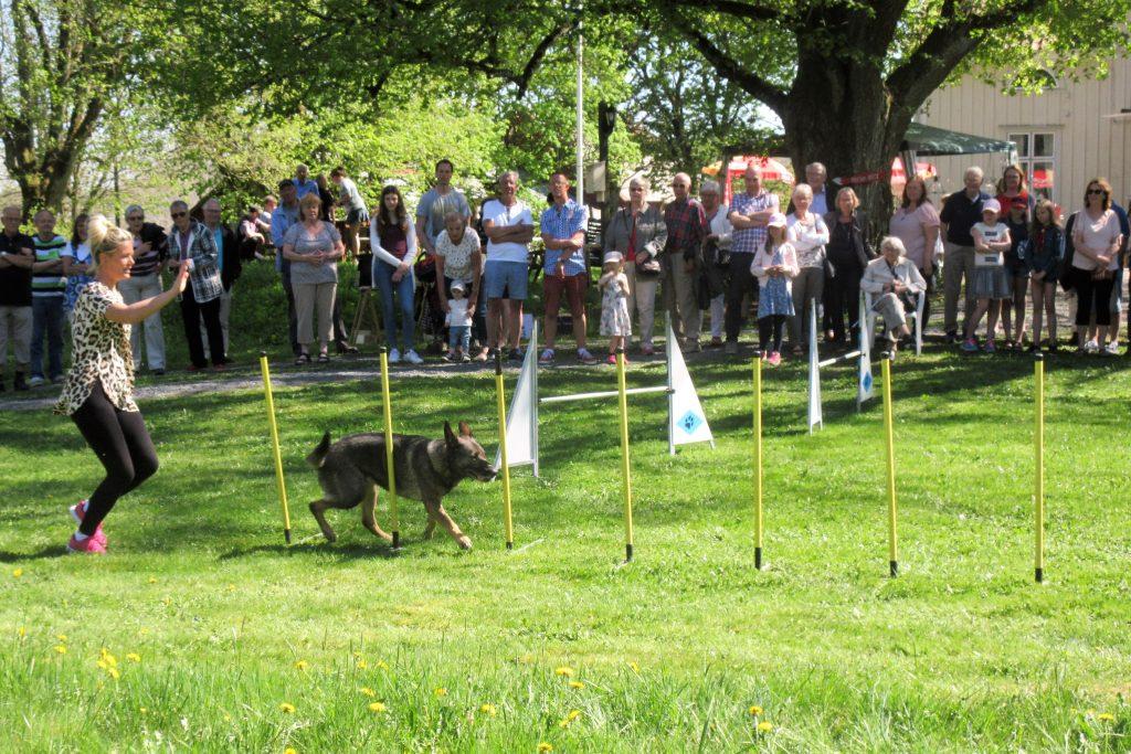 I agillity-uppvisningen fick man se hundarna i aktion på hinderbanan,