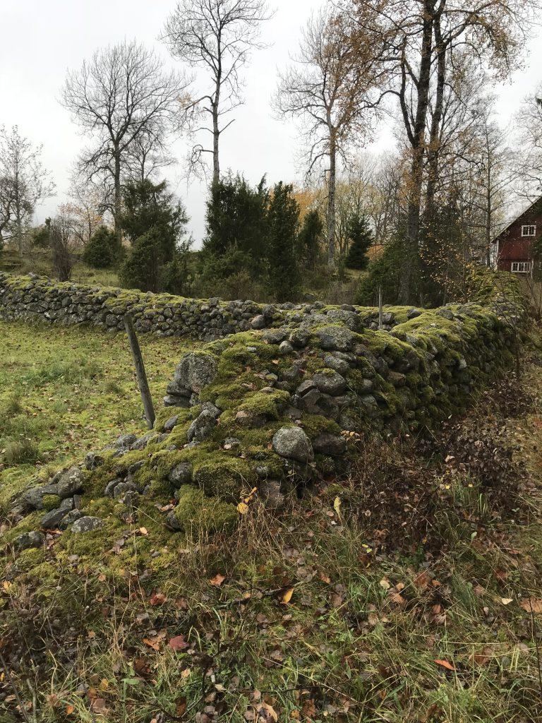 På Ljungsberg finns långa fina stengärdgårdar.