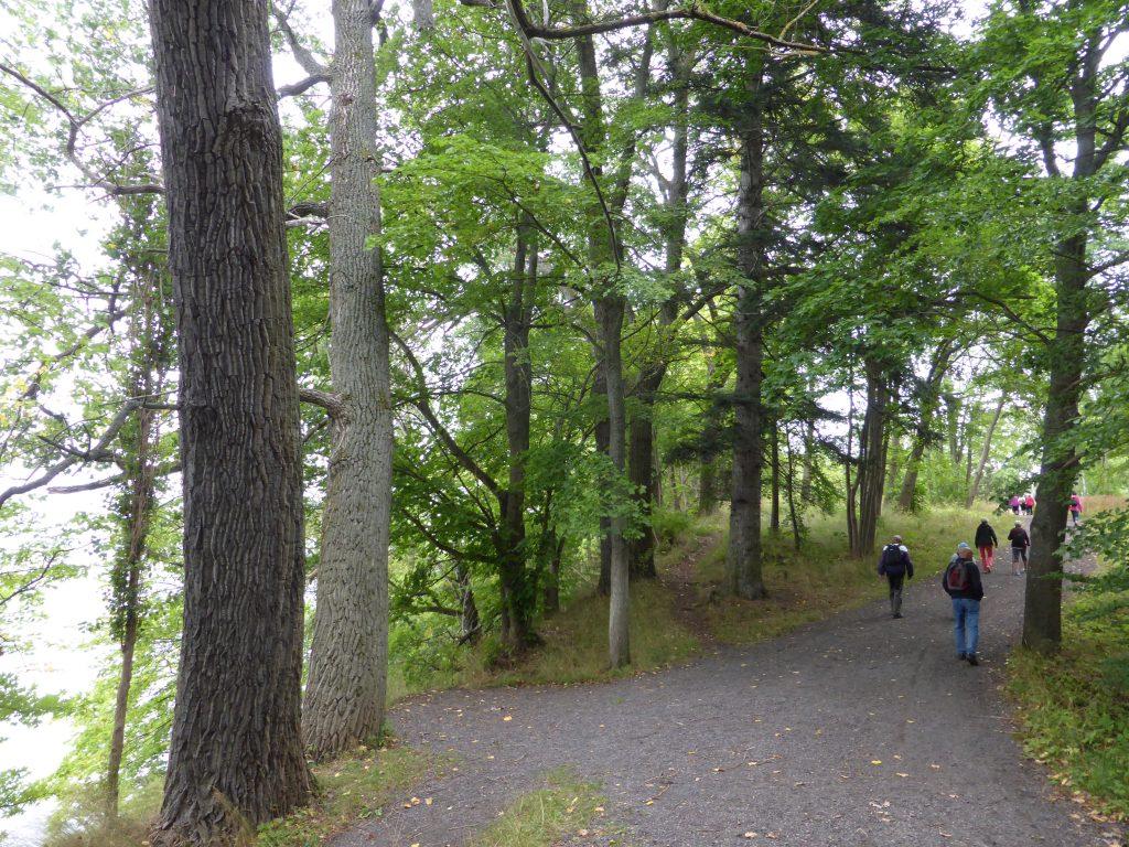 Från Rosariet gick vi på vandringsleden och gick österut. Till en början ett område med magnifika träd av olika slag.