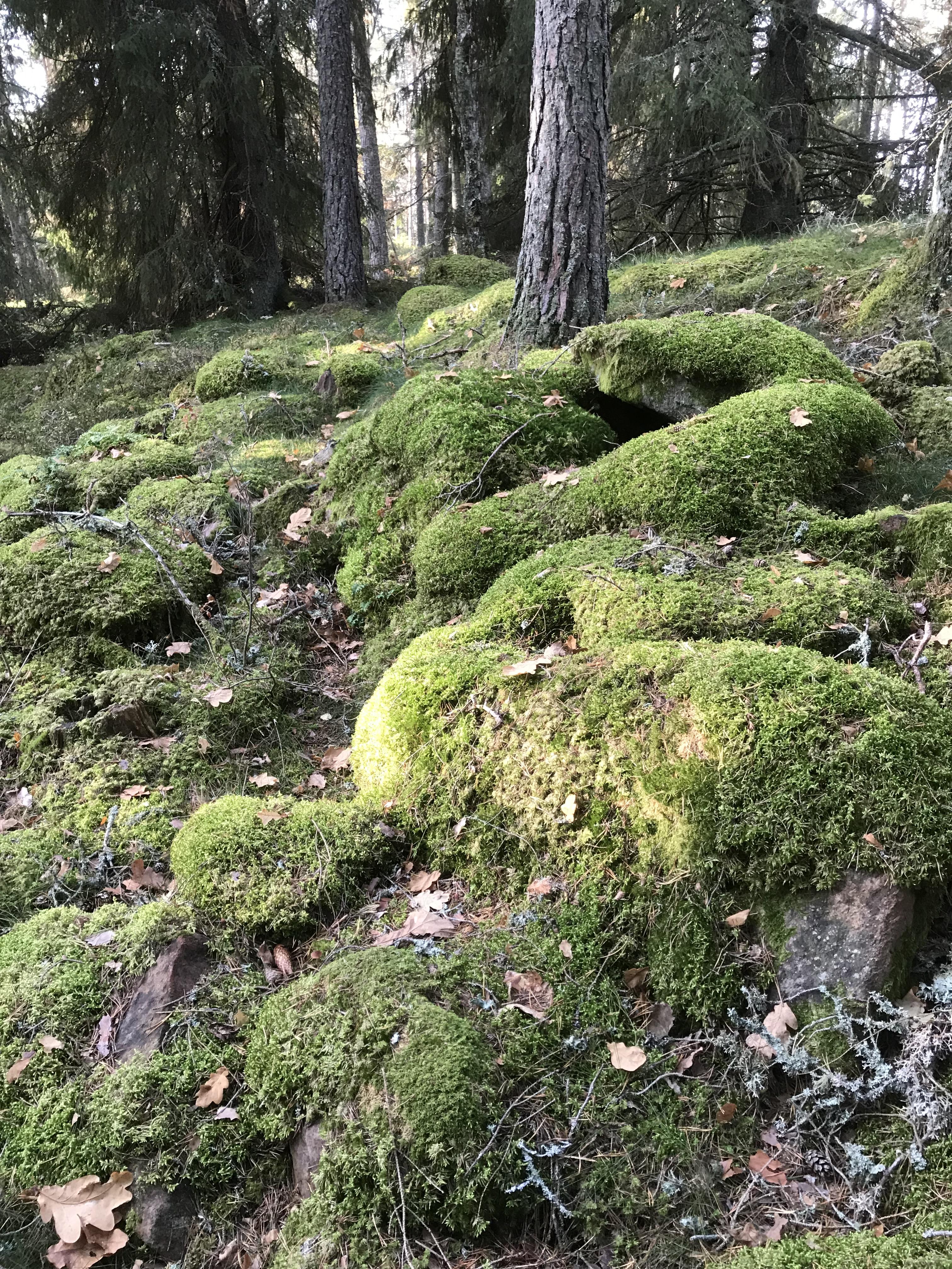 Av några mossbelupna stenar kunde Bauer med sin fantasi få fram bilden av en hel grupp troll.