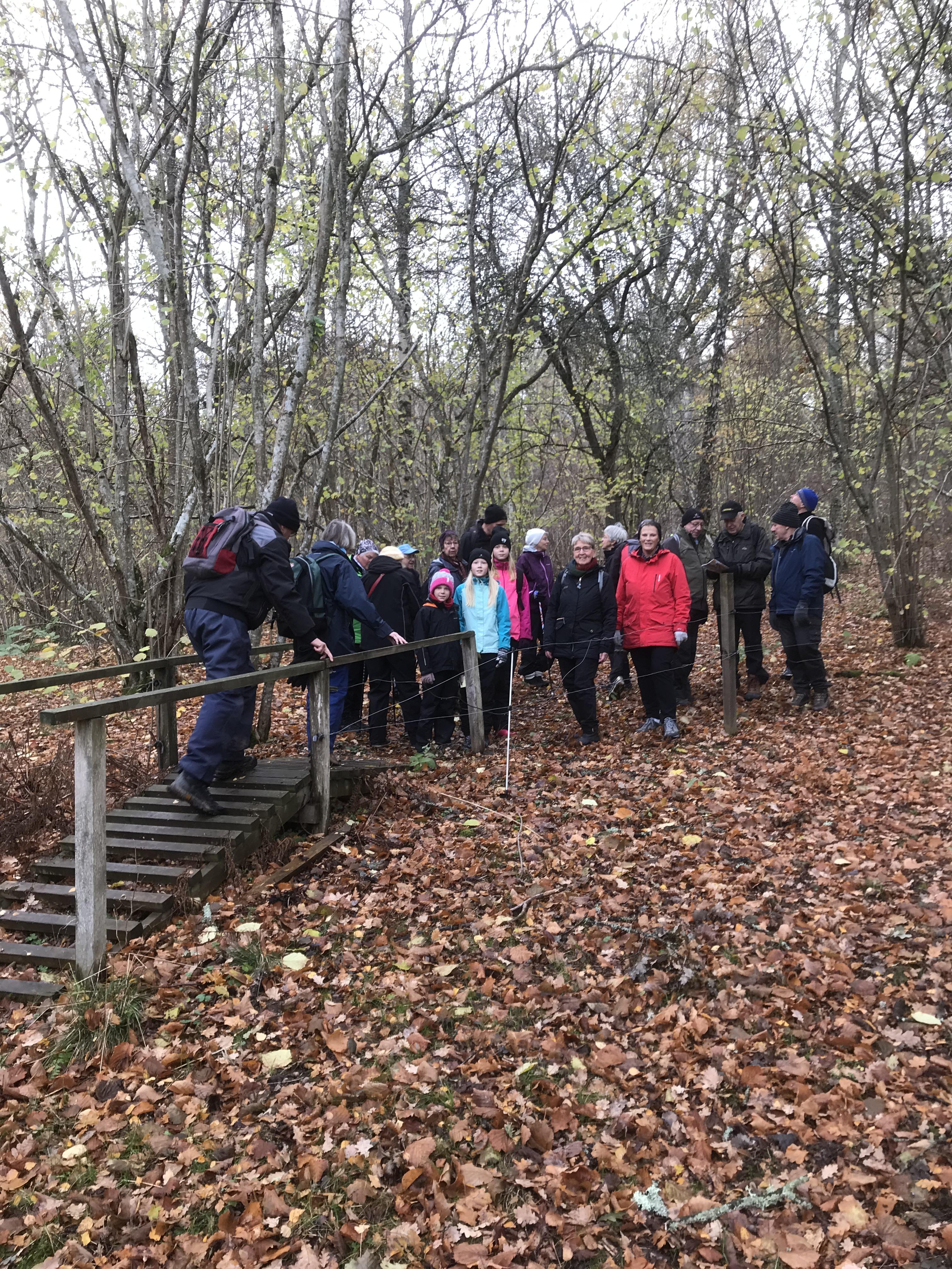 Turen började genom grov ek- och bokskog med betesfållor med passager.