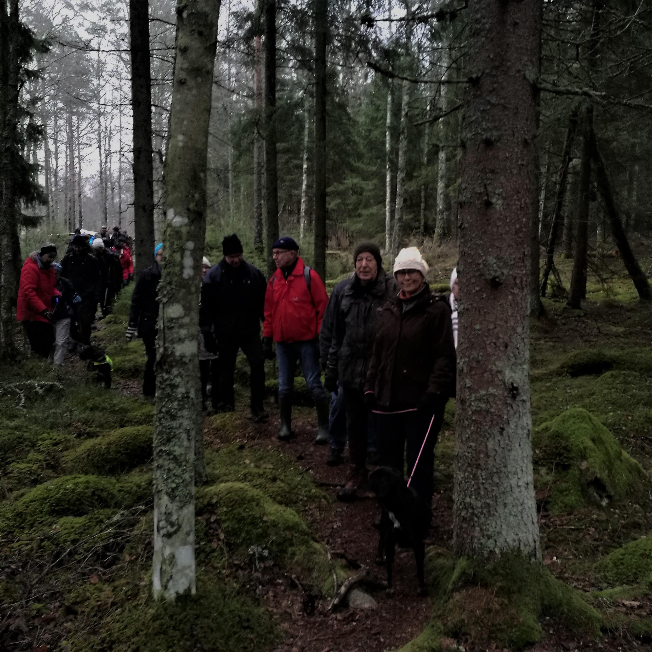 Vandringen startar genom skogen.