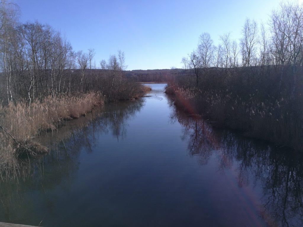 Här i kanalen har bävern sin hydda.