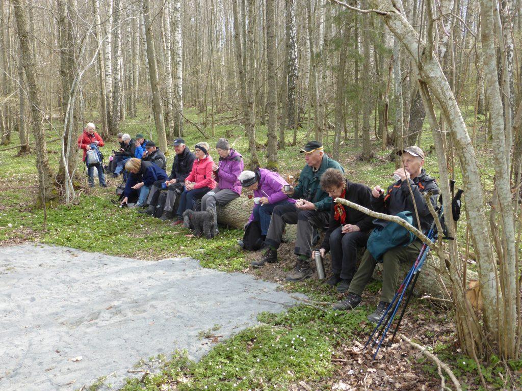 Det fanns också stockar i naturen att sitta på.