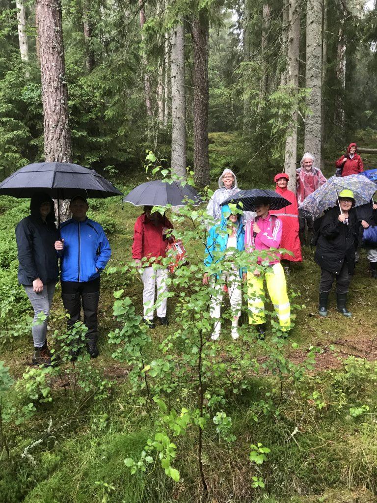 Det regnade inte hela tiden, men ibland fick paraplyerna fällas upp. Helen Bjurulf, blomsterguiden, i de gula byxholkarna var väl rustad.