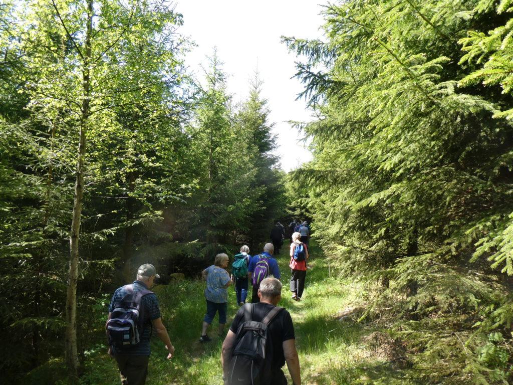 Om skogen ska brukas rationellt så måste den finnas i olika stadier. Även som tät ungskog.