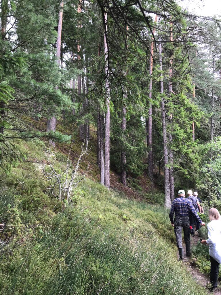 Leda följer en brant sluttning. Väl tillbaka hade vi gått 7 fina km.