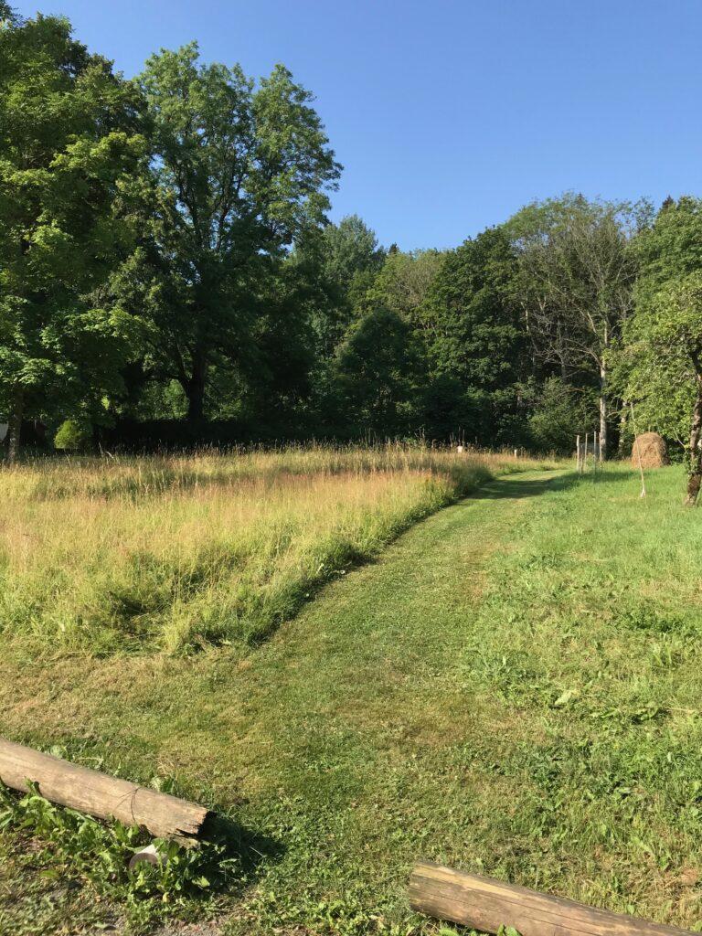 Ett område med väldigt kraftigt gräs var slaget ett par veckor före. Skillnad till det oslagna synas här.