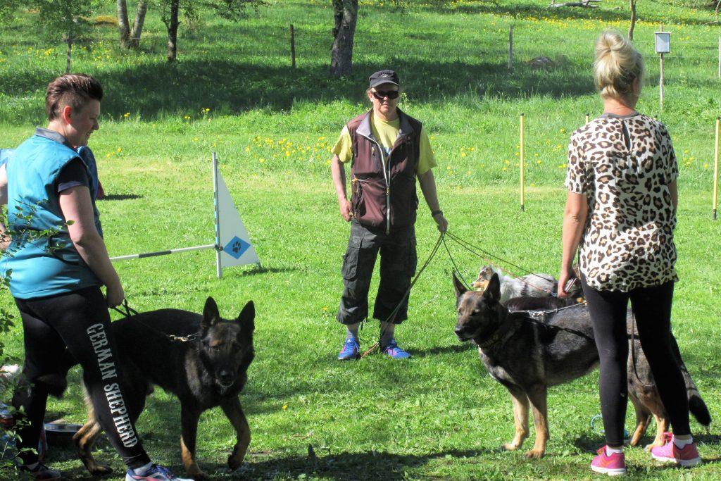 Brukshundsklubben medverkade med både stora och små vovvar.