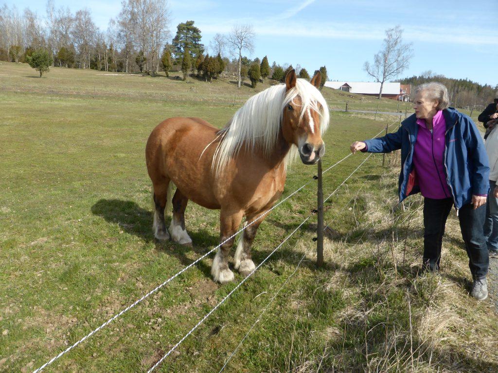På väg till Turba mosse kom denna vackra häst och ville få lite uppmärksamhet.