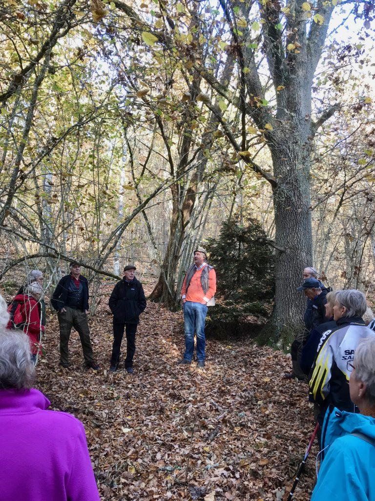 Det var en mycket omväxlande skog. Här berättas om regalrätten av ekskogen.