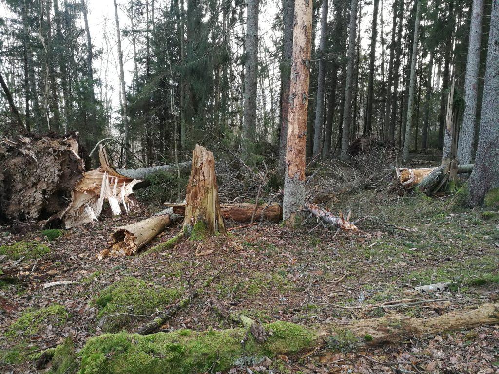 Nya vidnfällen blandas med virke från tidigare stormar.