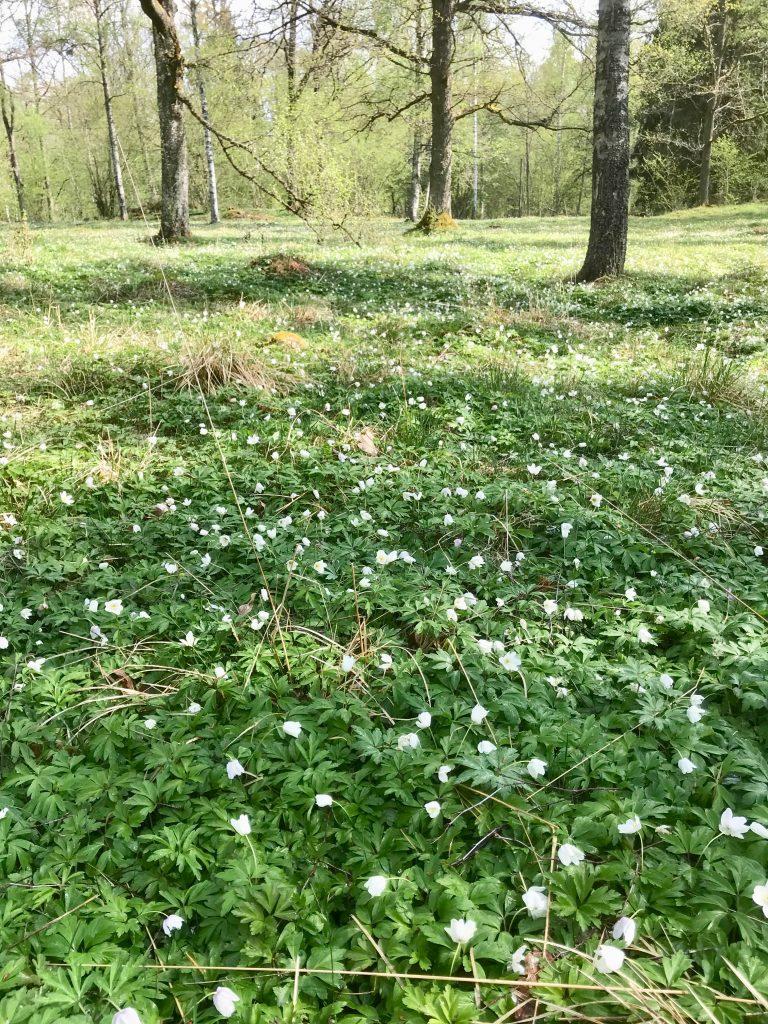 Bengt Thörn heter ägaren som håller hagen i så fint skick.
