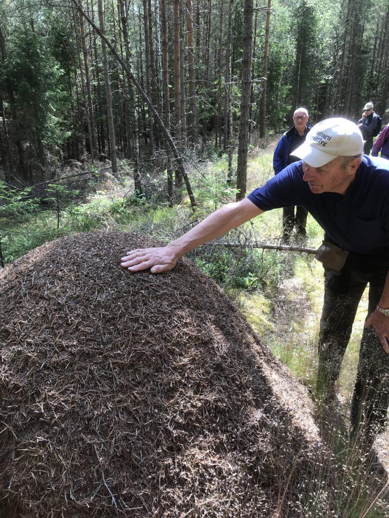Vid en rejäl myrstack visade Hans hur man kan lägga handen på några sekunder och få känna doften av myrsyra.