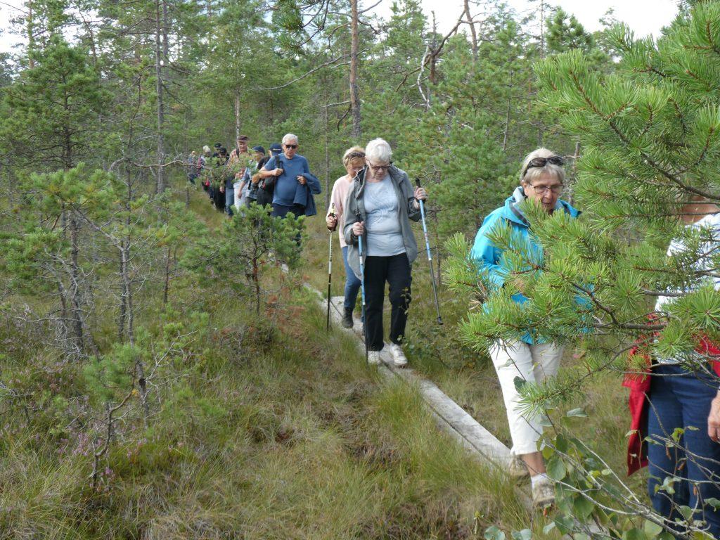 Sedan var det dags att återvända. Först ett par hundra meter på spången över mossen. Sedan var det mest en fin skogsbilväg.