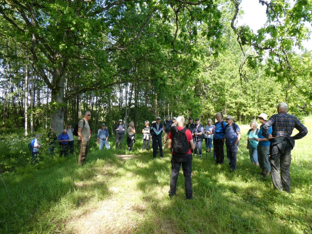 För inte så länge sedan brukade Jan-Åke denna åker. Vid avverkning av granskogen bakom lämnades de magnifika ekarna, som nu är ännu ståtligare.