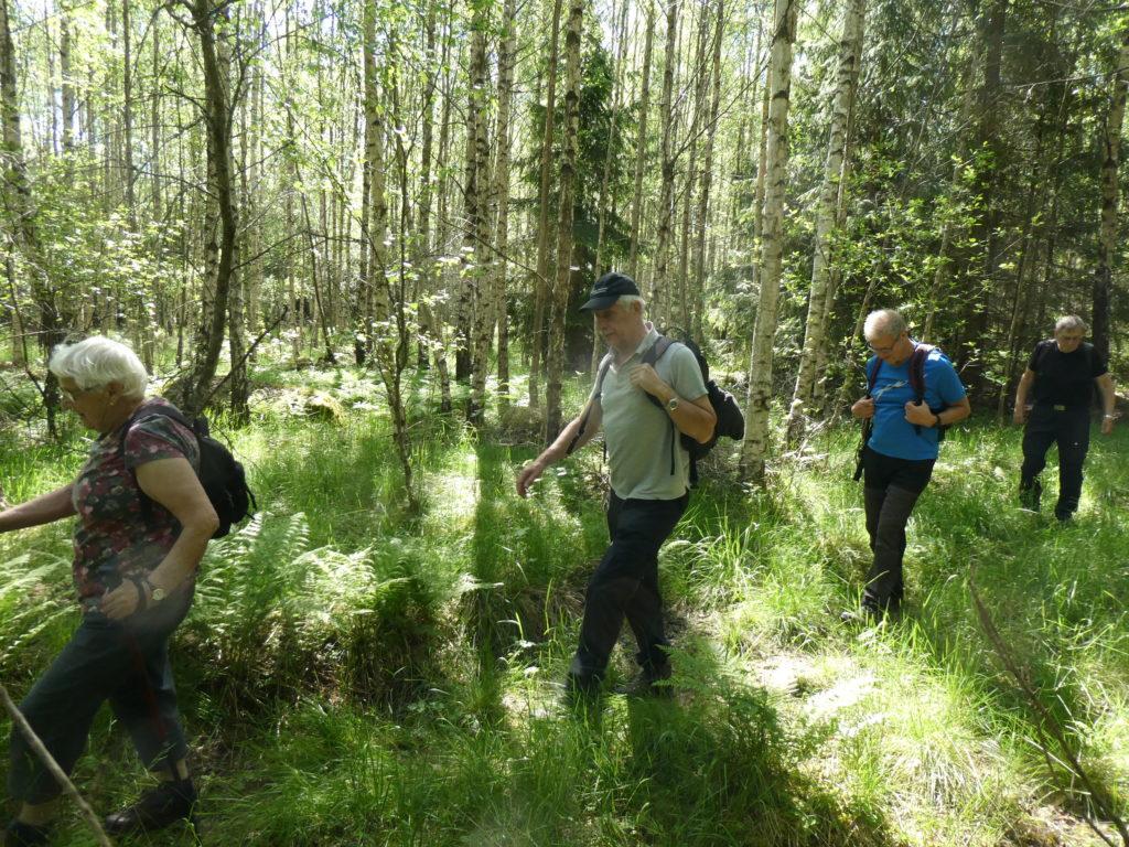 Inte bara granskog. vi passerade även vackra björkbestånd.