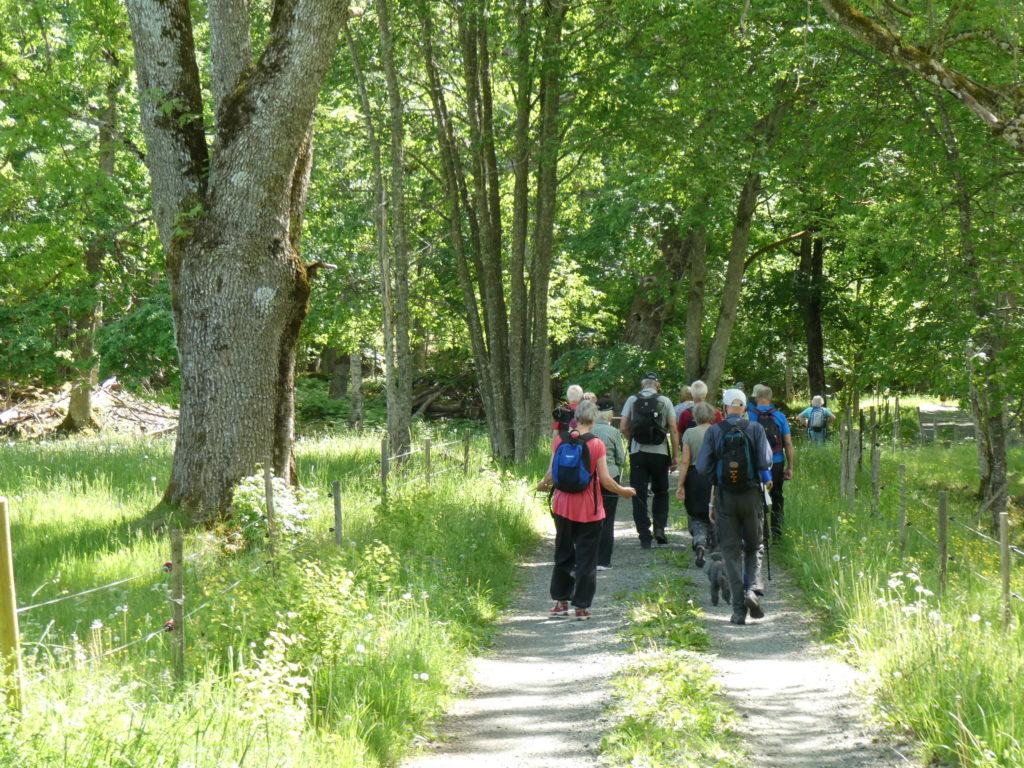 Sedan tillbaka mot Ingaryd på riksvägen med sina gamla fantastiska alléträd.
