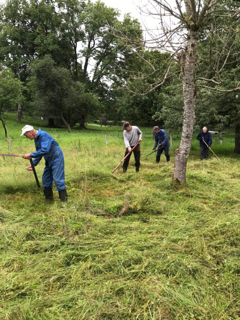 Uno, Bernt och Sune på rad efter varandra och Berit efter som sprider gräset för torkning.
