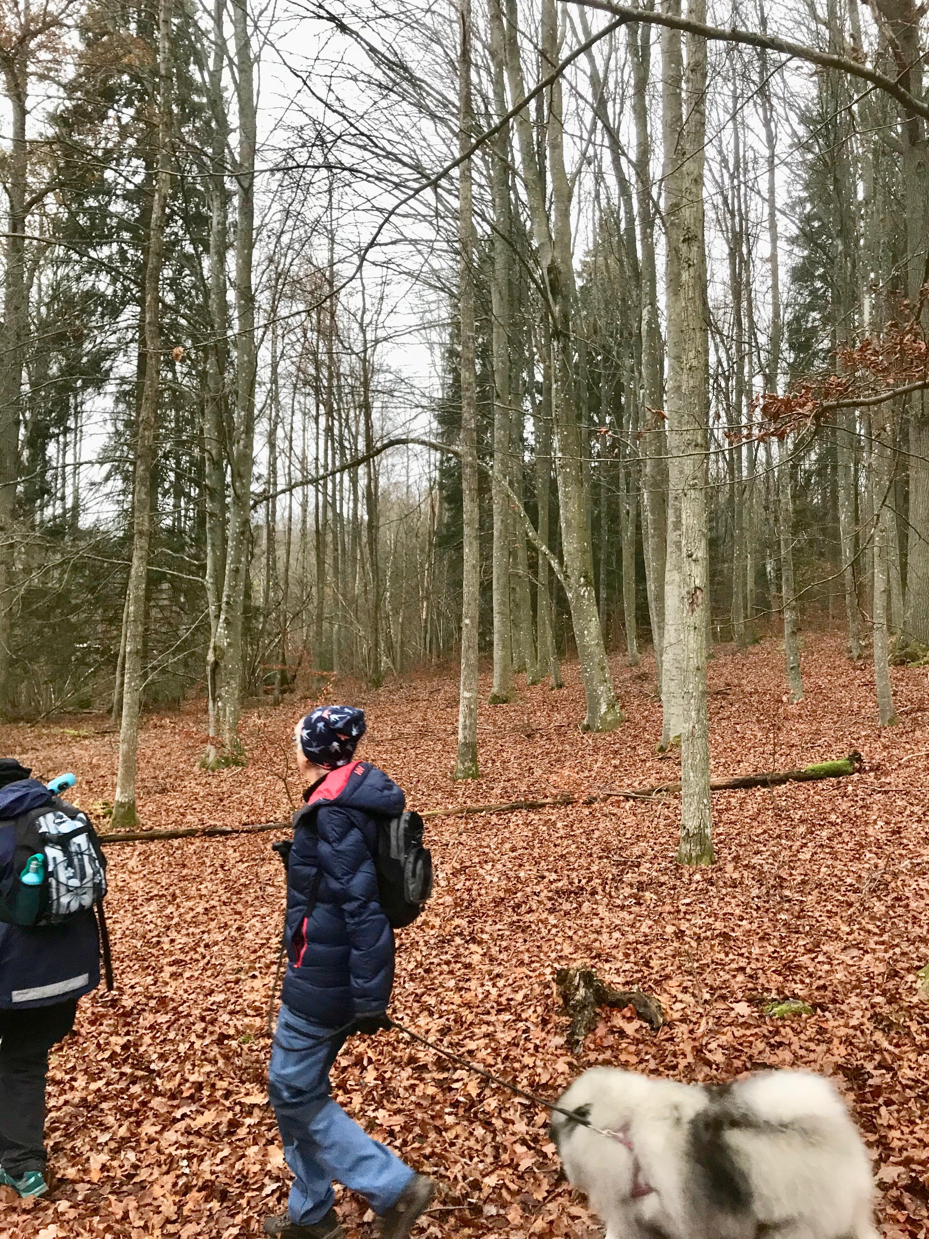 Efter Tubbarp gick vi genom en fin bokskog. Vi ska göra om vandringen i maj när blåsipporna står i sitt flor.