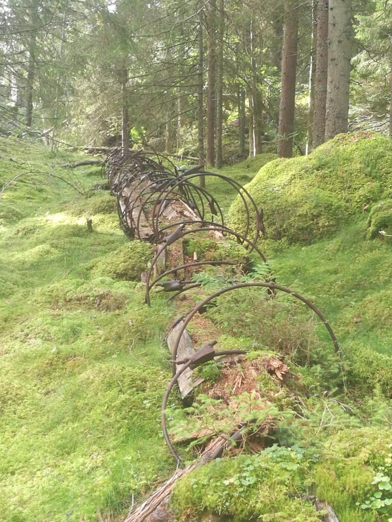 Detta är inte skelettet av någon förhistorisk reptil, utan resterna av trätuben till Kåperyds kraftverk.