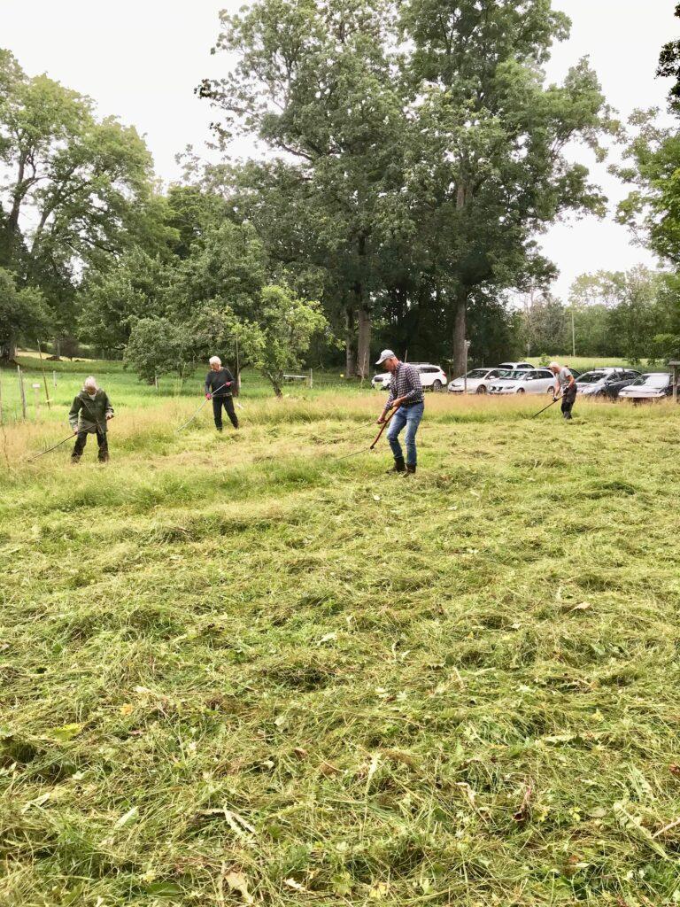 Vi började redan kl 08:00 för då är gräset daggfuktigt och lättare att slå.